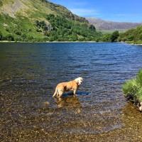 A498 Stunning lake and dog walk, Wales - BD5D8C91-0388-47DA-9E80-99666CC7A7E6.jpeg