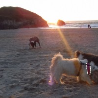 Holywell Bay Beach - dog-friendly, Cornwall - 20190424_202035.jpg