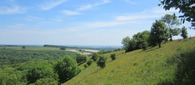 A30 dog walk near Shaftesbury, Wiltshire - Driving with Dogs