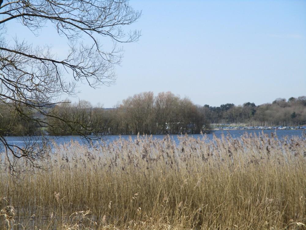 Lakeside dog walk and picnic spot, Somerset - Dog walks in Somerset.JPG
