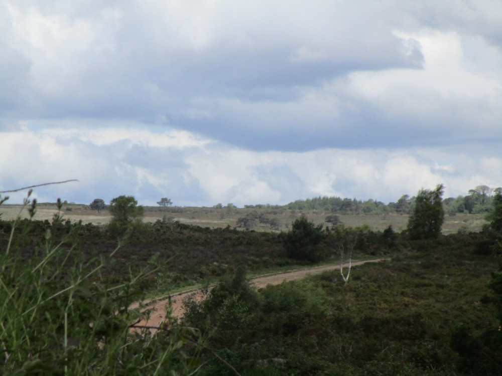 Heathland dog walk near East Budleigh, Devon - Devon dog-walking places.JPG