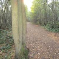 Clowes Wood dog walk, Kent - Dog walks in Kent