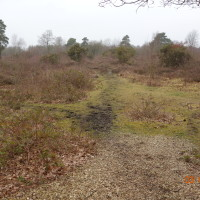 Snelsmore Common Country Park dog walk, Berkshire - Berkshire dog walk