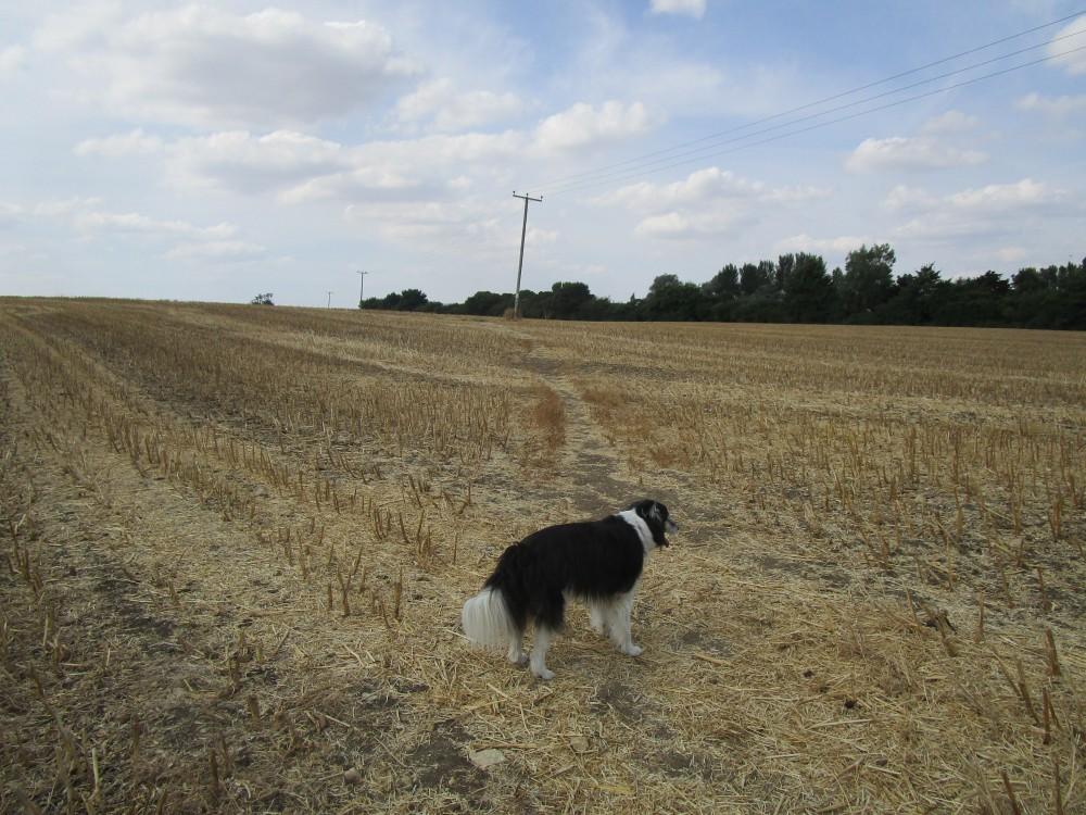 Greens Norton dog walk and dog-friendly pub, Northamptonshire - Dog walk and dog-friendly pub Northamptonshire