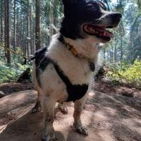 Woodland dog walk with loads of paths, Norfolk - 3D104215-96B3-4752-91C2-03C3E3378C30.jpeg