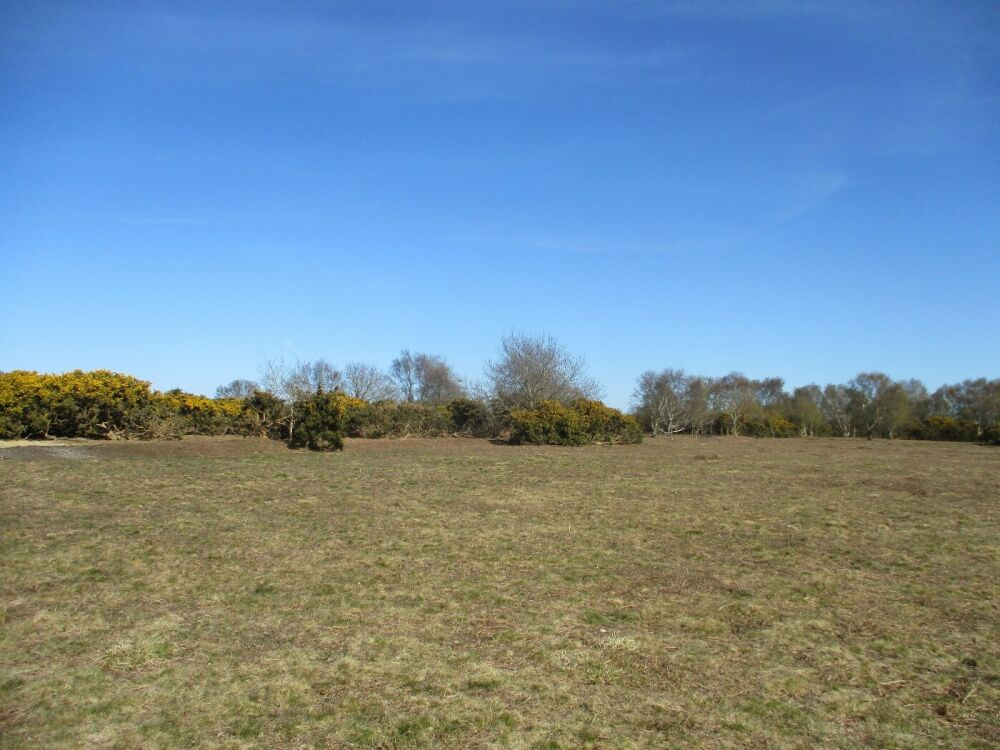 A149 A dog walk on the Heath, Norfolk - Norfolk nature ramble with the dog.JPG