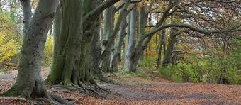 A6 dog walk near Barton and the A6, Bedfordshire - Driving with Dogs