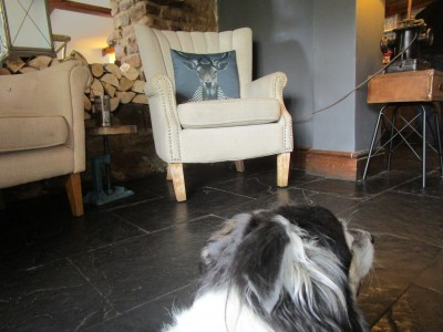 A6 dog-friendly pub and dog walk near Market Harborough, Northamptonshire - Driving with Dogs