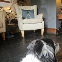 Braybrooke dog-friendly pub and dog walk, Northamptonshire - Dog walk and dog-friendly pub Northamptonshire