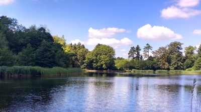 A419 country park dog walks and cafe near Swindon, Wiltshire - Driving with Dogs