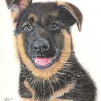 JCW Pet Portraits, Staffordshire - 245A70C8-60A3-4EB9-8BD8-10094844B76C.jpeg