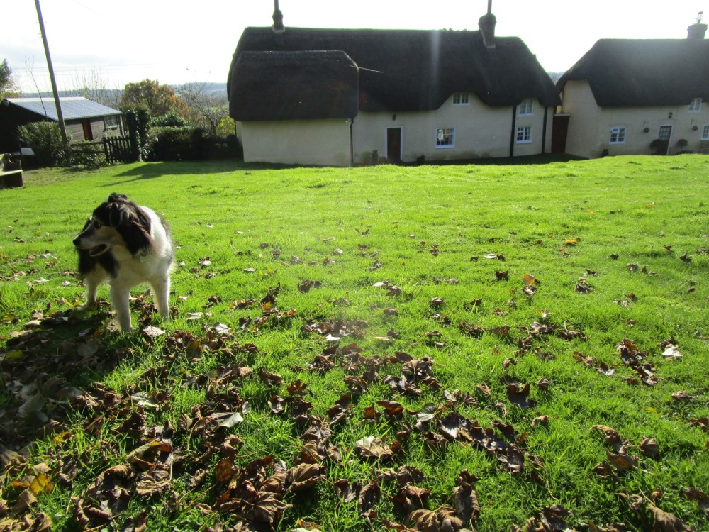 Rural pub and short dog walk, Dorset - IMG_6210.JPG