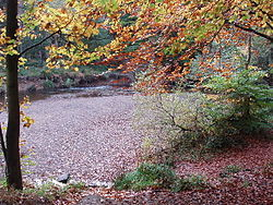 Forest dog walk and cafe near Durham, County Durham - 250px-Bedburn_Beck_in_autumn,_Hamsterley_Forest.jpg