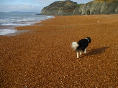 A35 Coast path walk and dog-friendly inn, Dorset - Driving with Dogs