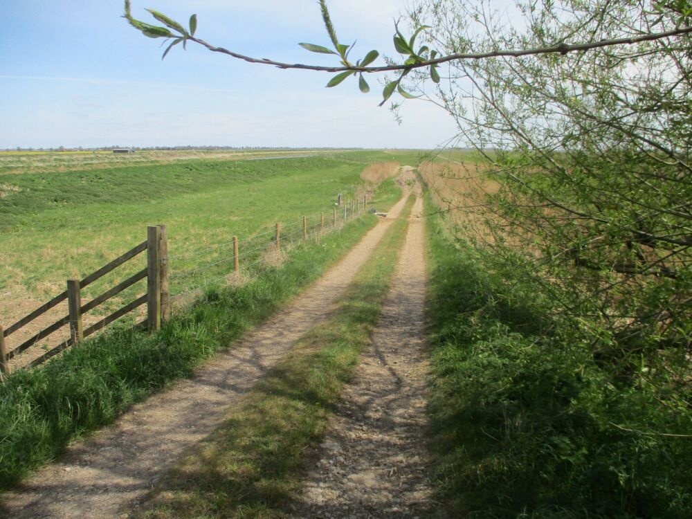 Exploring the fens with the dog near Peterborough, Cambridgeshire - Dog-friendly walk and pub in the Fens