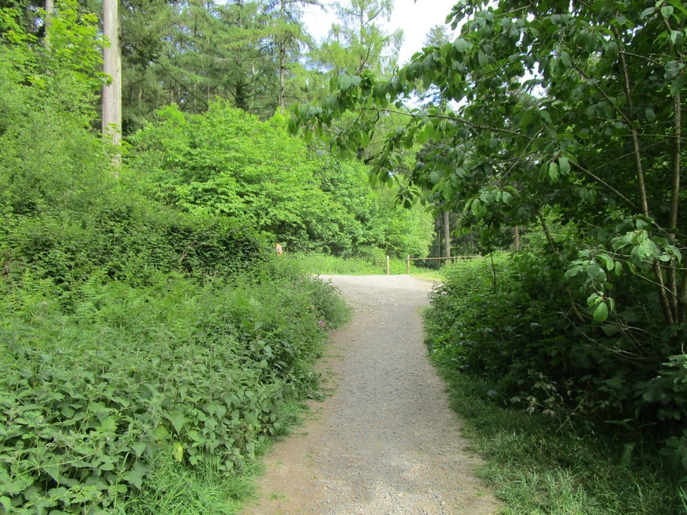 A377 Forest dog walk near Eggesford, Devon - Devon dog walking places.JPG