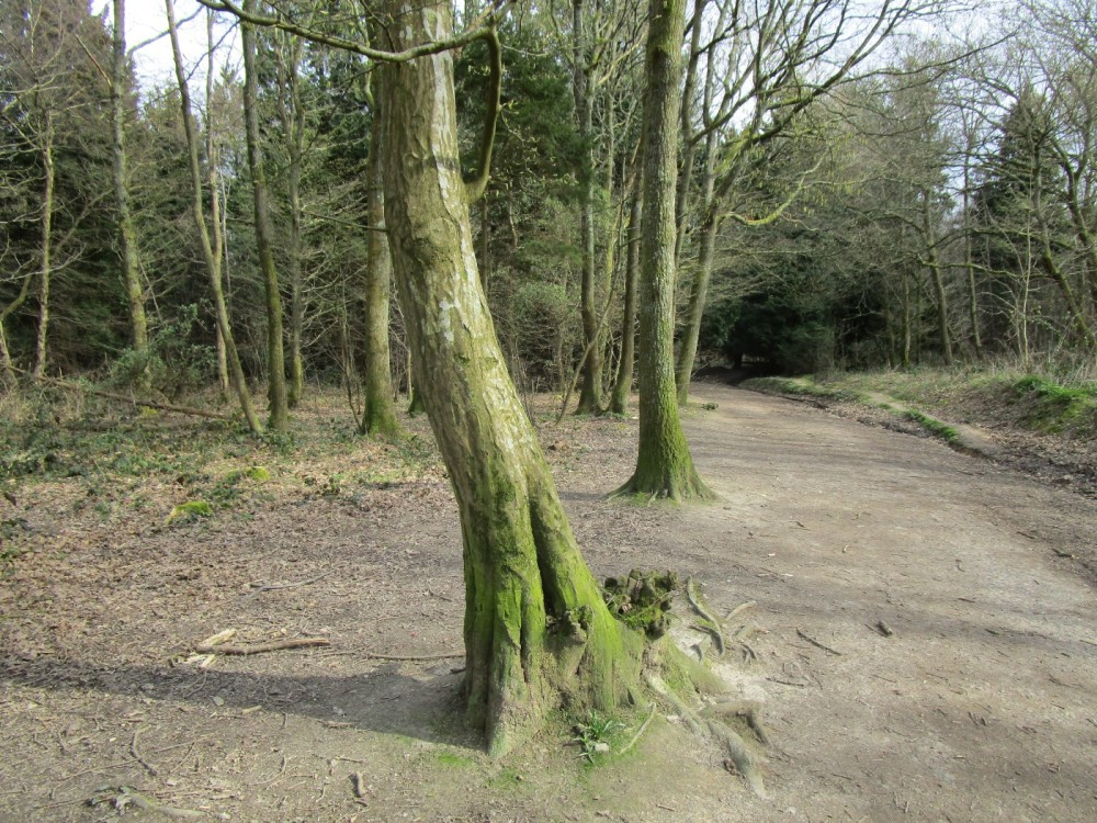 A22 woodland dog walk, East Sussex - Dog walks from dog-friendly pubs in Sussex.JPG
