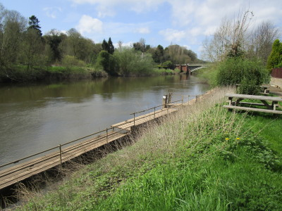 Holt Fleet dog-friendly pub and dog walk, Worcestershire - Driving with Dogs