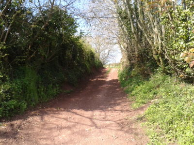 Off the beaten track country pub and dog walk, Somerset - Driving with Dogs