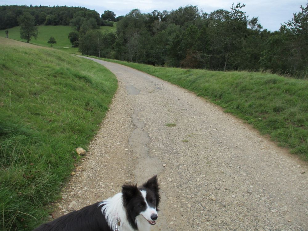 Gentle Cotswold dog walk, Gloucestershire - Dog walks in the Cotswolds.JPG