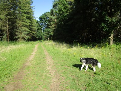 Bacton Wood dog walk, Norfolk - Driving with Dogs