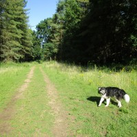 Bacton Wood dog walk, Norfolk - Dog walks in Norfolk