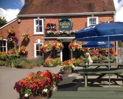 Wimborne riverside walk and dog-friendly pub, Dorset - Driving with Dogs