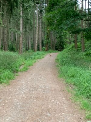 Walk on river Eden and Coombs Wood, Cumbria - Driving with Dogs