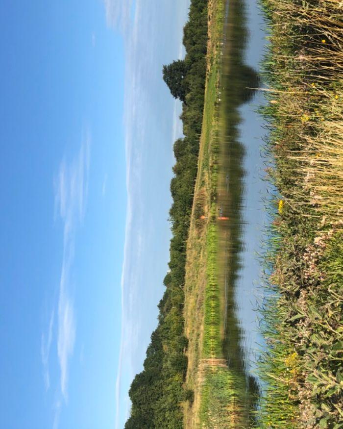 M40 Junction 11 - A422 towards Banbury, Oxfordshire - Dog walk near Banbury.jpeg