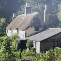 A35 woodland dog walk and literary trail, Dorset - IMG_0330.JPG