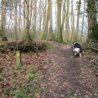 A25 woodland scramble and ramparts dog walk, Kent - IMG_0955.JPG