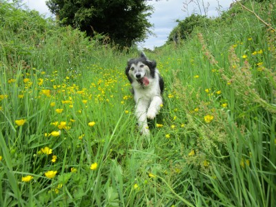 Peak District dog-friendly pub and dog walk near Buxton, Staffordshire - Driving with Dogs