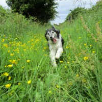 Longnor dog-friendly pub and dog walk, Derbyshire - Peak District dog-friendly pub and dog walk