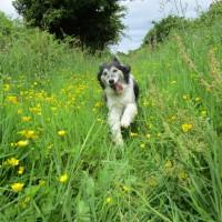 Peak District dog-friendly pub and dog walk near Buxton, Staffordshire - Peak District dog-friendly pub and dog walk