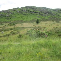 A470 wildlife reserve picnic spot and walk, Wales - dog-friendly pubs and dog walks in Wales.JPG