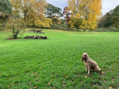 A38 dog walk and cafe near Plymouth, Devon - Driving with Dogs