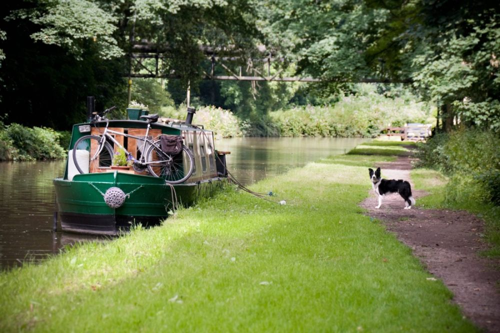 Preparing your dog for a canal boat holiday