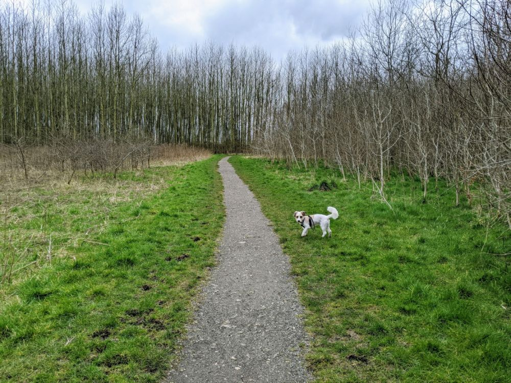 Local Dog Walk: Wheatacre Woods, Lancashire - IMG_20200307_142854.jpg