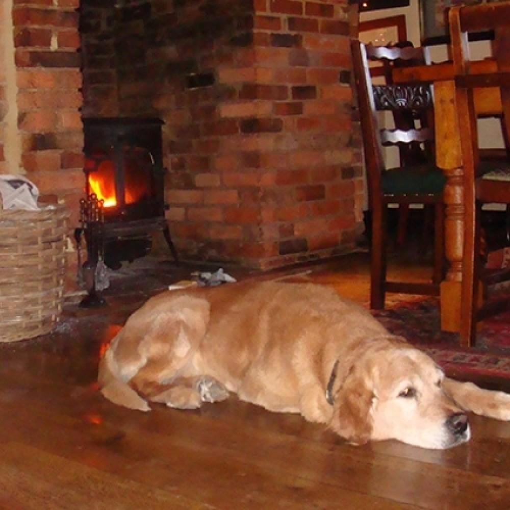 Dog-friendly dining near the A21, Kent - Kent-dogfriendlypubs.JPG