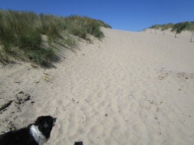 One of the best dog-friendly beaches in Cardiganshire, Wales - Driving with Dogs