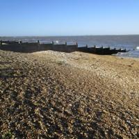 Whitstable dog-friendly beach, Kent - Kent dog-friendly beaches