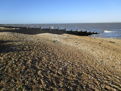 Whitstable dog-friendly beach, Kent - Driving with Dogs