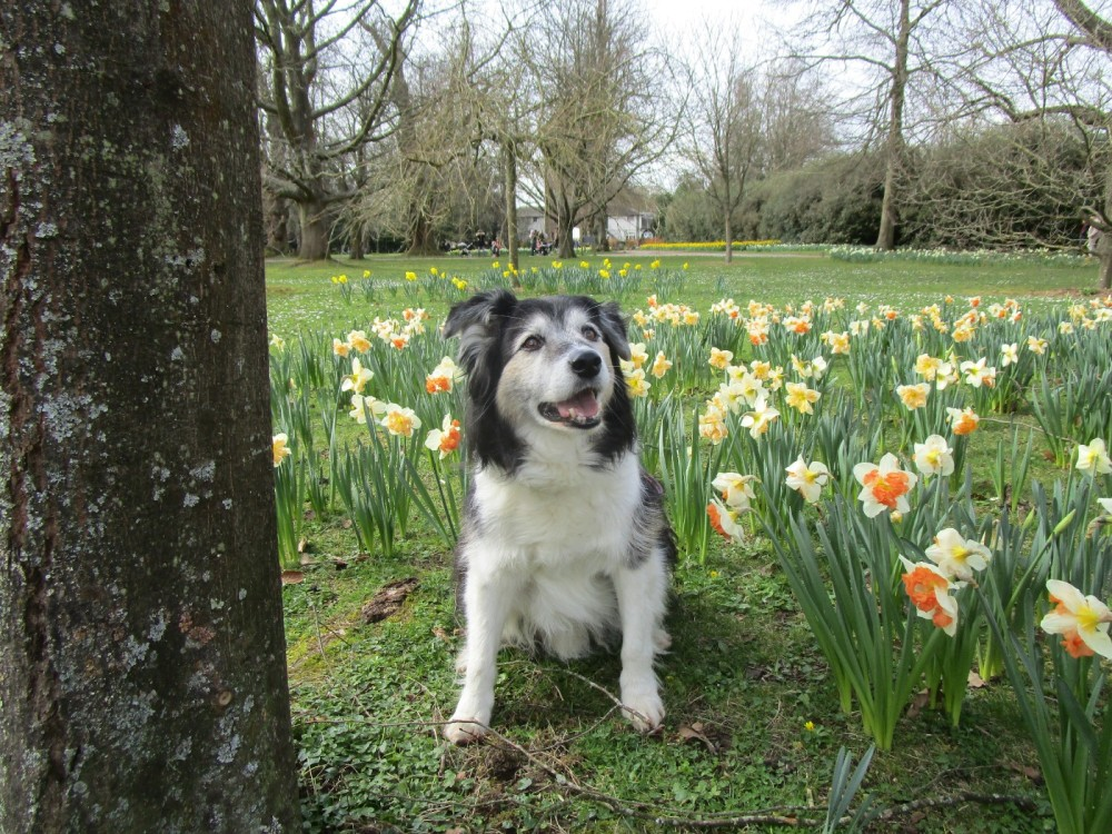 A246 Edwardian splendour and a dog walk, Surrey - Surrey dog walks and dog-friendly pubs.JPG