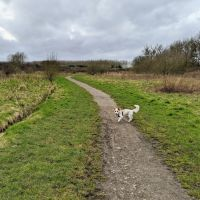 Local Dog Walk: Wheatacre Woods, Lancashire - IMG_20200307_141938.jpg