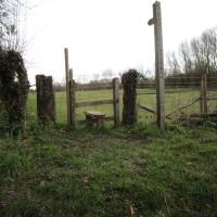 A515 rural pub and dog walk, Staffordshire - Dog walks in Staffordshire