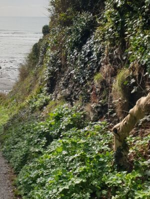 Downderry dog walk and dog-friendly beach, Cornwall - Driving with Dogs