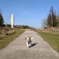 M62 J.7 Dog Walk at Sutton Manor Woodlands (The Dream Sculpture), Merseyside