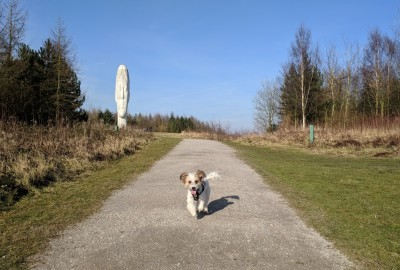 M62 J.7 Dog Walk at Sutton Manor Woodlands (The Dream Sculpture), Merseyside - Driving with Dogs