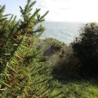 Swanage country park dog walk, Dorset - IMG_6443.JPG