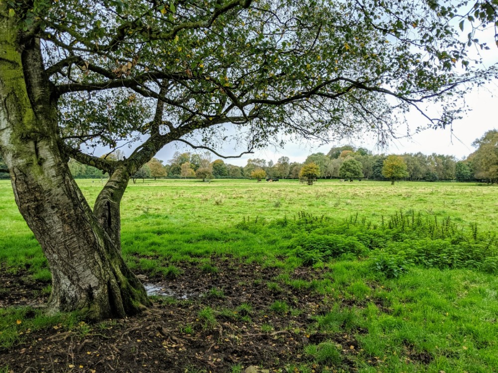 Marbury dog walks near Comberbach, Cheshire - IMG_20191012_144907.jpg